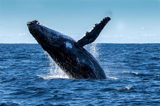 whale_550x364